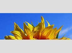 Blumen Hintergrundbilder für dich!