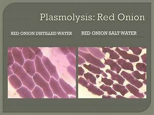 Ppt - Review The Plasmolysis Powerpoint Presentation