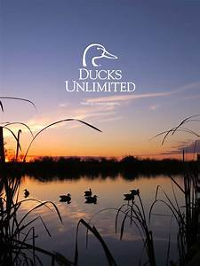 Ducks, Unlimited, Mobile, Wallpaper