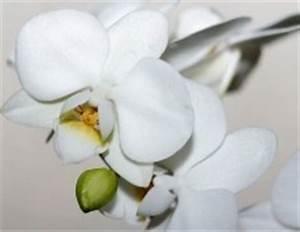 Dünger Für Orchideen : d nger ber 60 hausmittel tipps frag mutti ~ Eleganceandgraceweddings.com Haus und Dekorationen