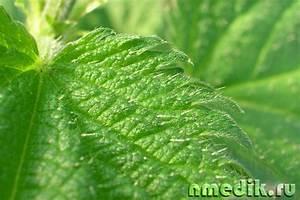 Травы для восстановления печени и почек