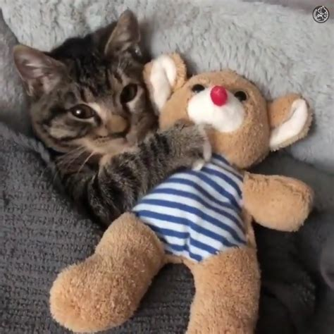 tierno gato gatos  de animales tiernos