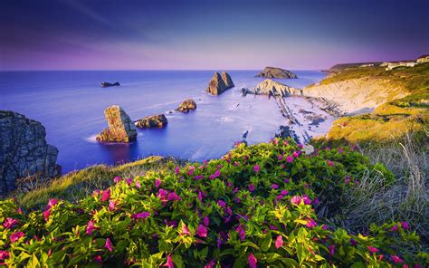 wallpaper coastline purple flowers beach coast rocks