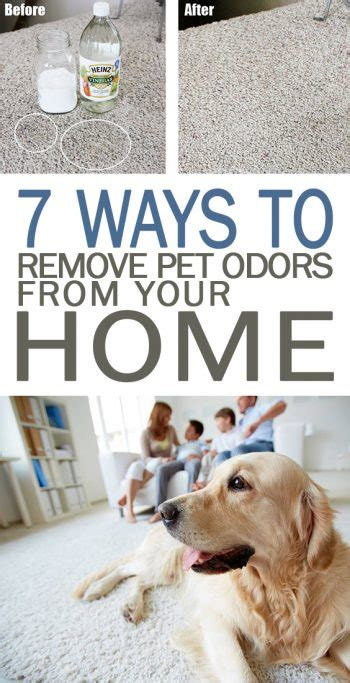 to remove odors from home how to remove odor from house fantastical 6 ways get rid bad 7 ways to remove pet odors from your home 101 days of