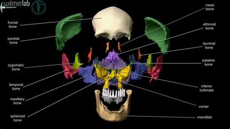 anatomia twn ostwn toy kranioy youtube
