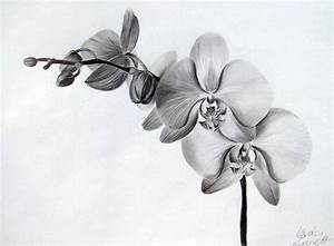 Orchid by Zeroxy92 | drawing lessons | Pinterest
