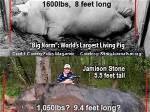 Hogzilla Monster Pig Alabama Kerry Dart Big Norm Debunks