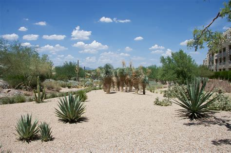 az landscaping formal landscape arizona backyard landscaping pictures az flag