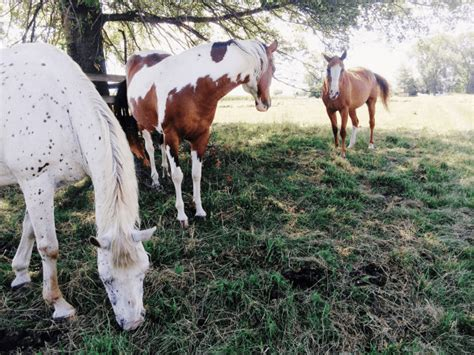 horse breeds racing overview breed equestrian