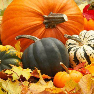 blette cuisine calendrier des fruits et légumes de l 39 automne magazine
