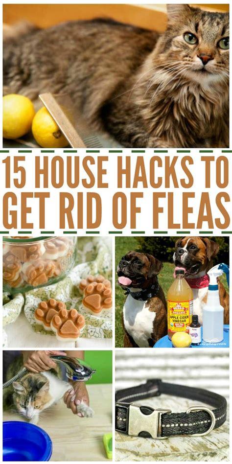 house hacks   rid  fleas pets diy  crafts