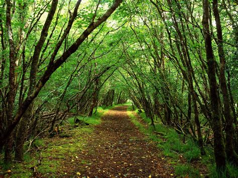 Wallpaper Of Green Forest by Green Forest Backgrounds Wallpaper Cave