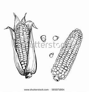 Maize Stock Images, Royalty-Free Images & Vectors ...