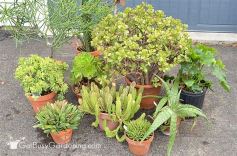 when to bring plants inside how to debug plants before bringing them indoors