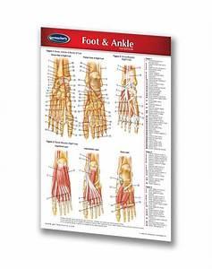 Foot  U0026 Ankle
