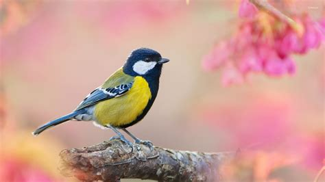 small bird on a branch wallpaper animal wallpapers 45492