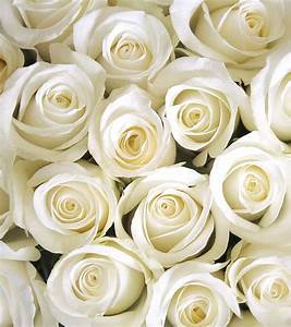 Beautiful White Flowers Bouquet – Thin Blog