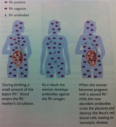 Healing 1 Maternity Pediatrics Nursing 2 With Johns At