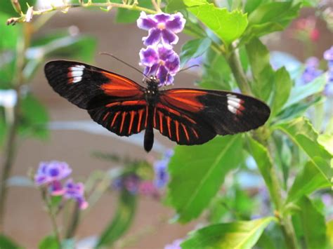 audubon butterfly garden and insectarium bugging out nola s audubon butterfly garden and