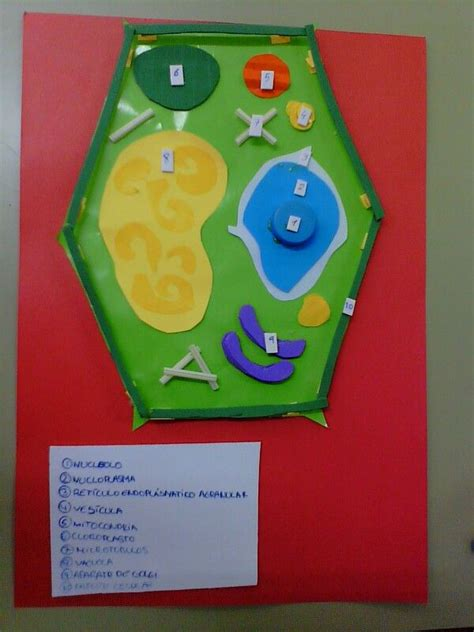 como hacer una celula animal de fomix celula vegetal 1 176 creamos la estructura 2 176 empezamos a
