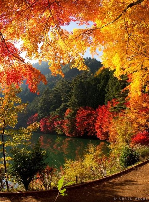 beautiful fall colors lovely fall scene autumn foilage pinterest