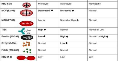 Iron Deficiency Tests