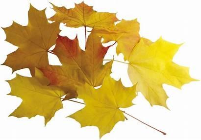 Autumn Leaf Leaves Transparent Purepng Creations Accessoires