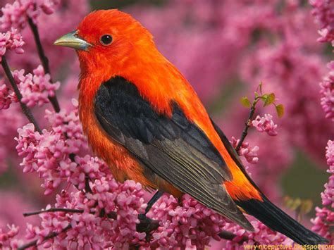 Nice Wallpapers, Beautiful Birds Pictures, Natural