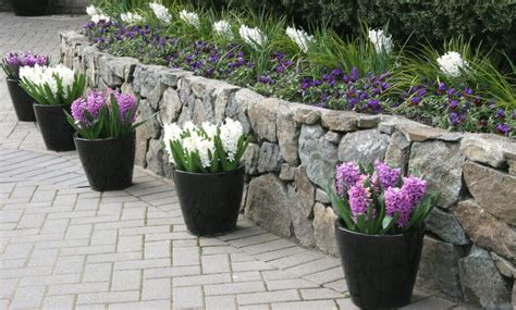 plants for patio borders 35 patio potted plant and flower ideas creative and lovely photos