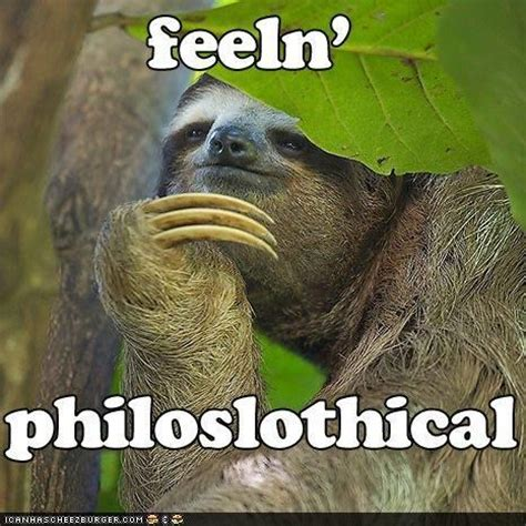 Sloths Memes - best sloth memes sloths philosophy and sloth humor