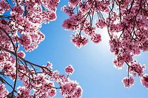 Rosa Blühende Bäume April : fotos rosa farbe blumen ast bl hende b ume ~ Michelbontemps.com Haus und Dekorationen