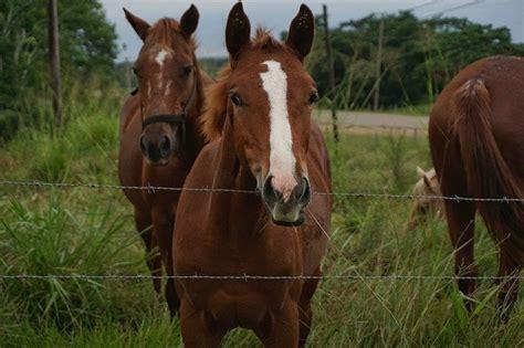 milben beim pferd milbenbefall vorbeugen erkennen und