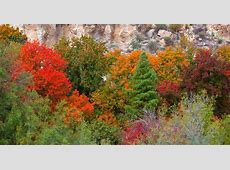 Where to see Arizona's fall colors