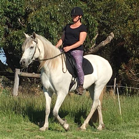 andalusian spanish cross horse horses horsezone riding