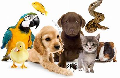 Animaux Mutuelle Resiliation Lettre