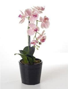 caring for orchids indoors after bloom caring for orchids indoors after bloom garden and plant ideas pinterest orchids indoor