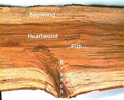 knots form  wood    happen wood