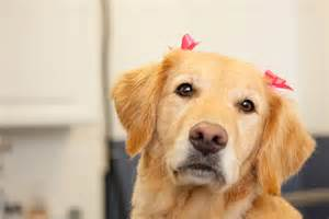hair bows for dog grooming cat grooming in morristown nj