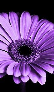TemplateMonster Infographic. Purple Color in Web Design ...