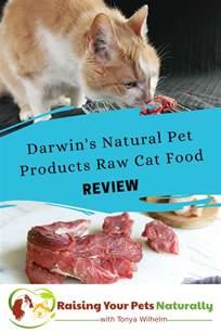 best food for indoor cats best cat food brands for indoor cats darwin s