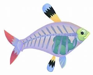 X Ray Fish Cartoon