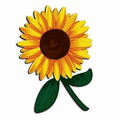 Sunflower Cartoon Clipart Clip Flower 3d Funny