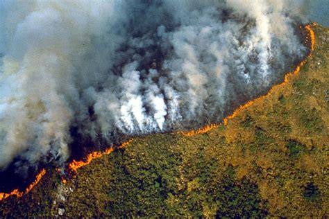 amazon wildfire dispatch weekly