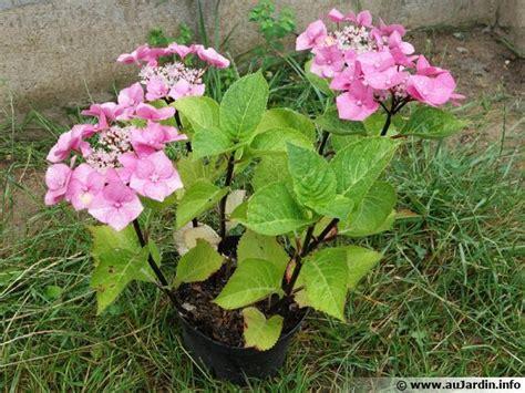 cuisiner du gibier comment planter un hortensia