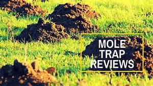 Best Mole Traps Reviews Uk