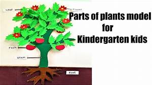 Parts Of Plants Science Project Model Diy At Home Easily