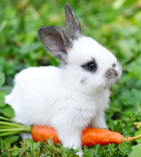 Can Rabbits Eat Carrots Daily Or Just As A Special Treat