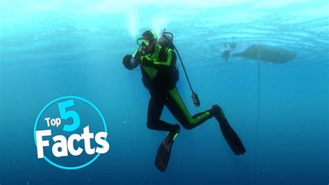 top 5 scuba diving facts youtube