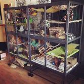 cool-hedgehog-cage