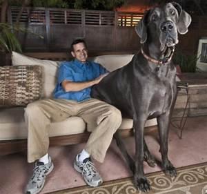 worlds biggest dog | Wonders Book: World's Biggest Dog ...